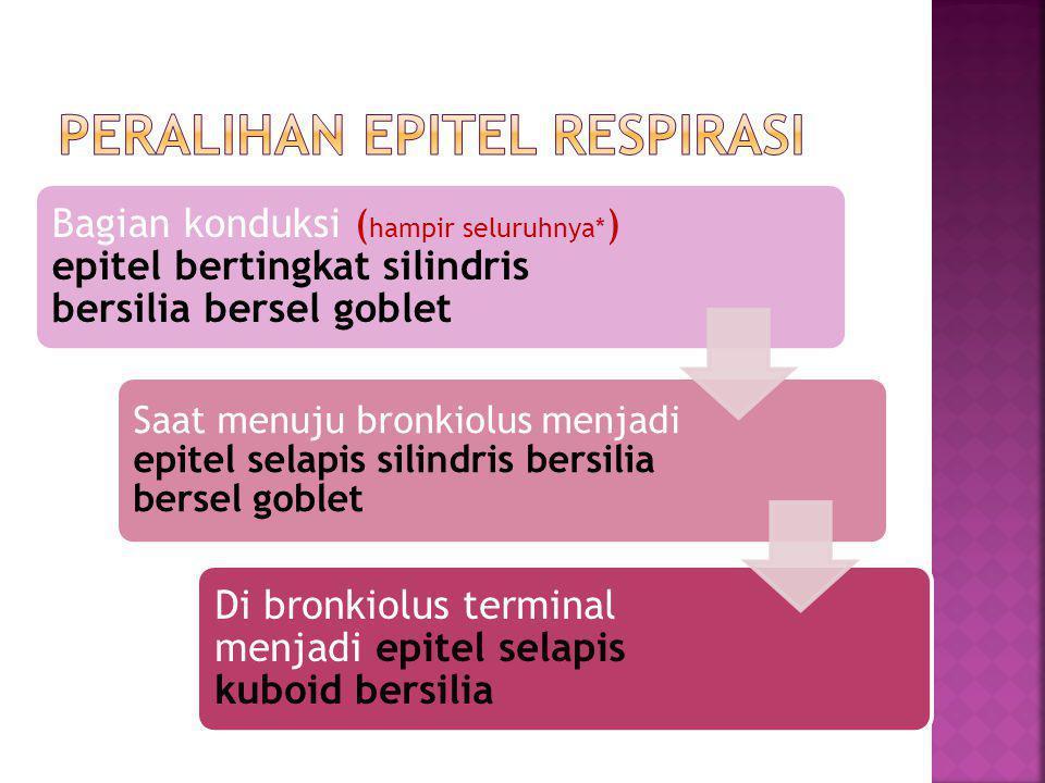 Bagian konduksi ( hampir seluruhnya* ) epitel bertingkat silindris bersilia bersel goblet Saat menuju bronkiolus menjadi epitel selapis silindris bersilia bersel goblet Di bronkiolus terminal menjadi epitel selapis kuboid bersilia