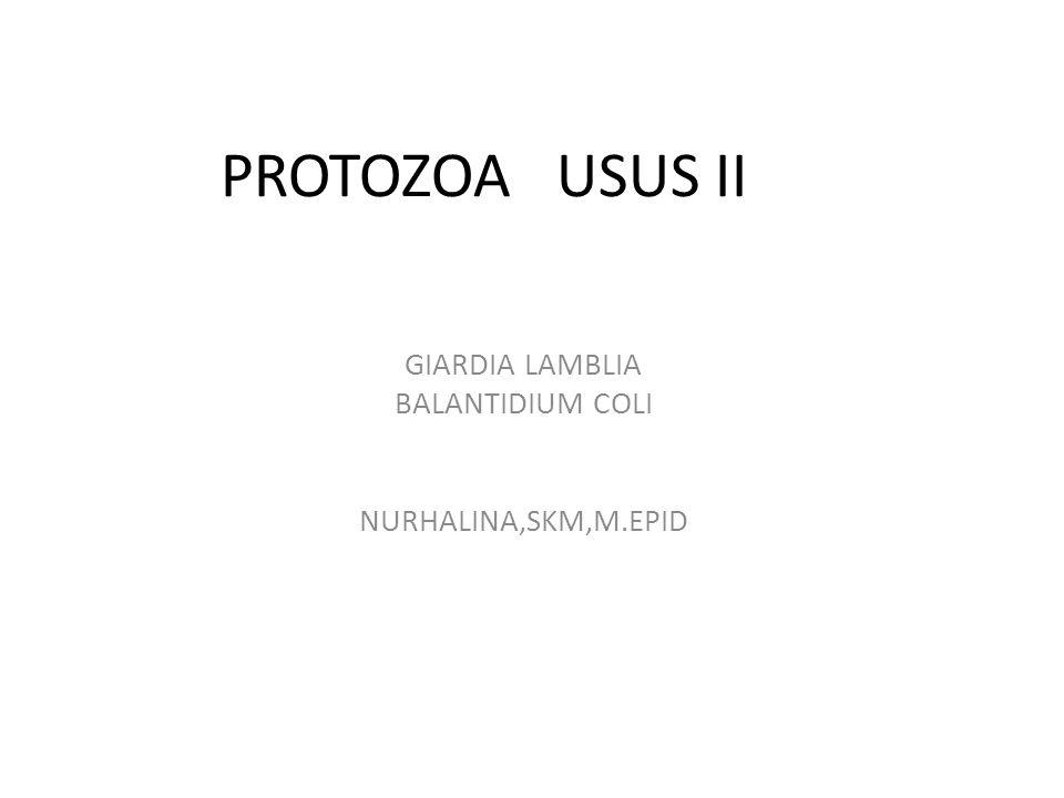 PROTOZOA USUS II GIARDIA LAMBLIA BALANTIDIUM COLI NURHALINA,SKM,M.EPID