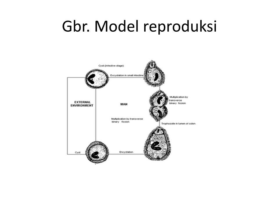 Gbr. Model reproduksi