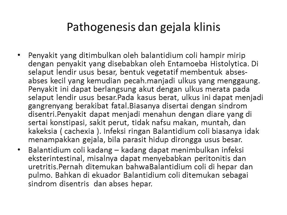 Pathogenesis dan gejala klinis Penyakit yang ditimbulkan oleh balantidium coli hampir mirip dengan penyakit yang disebabkan oleh Entamoeba Histolytica