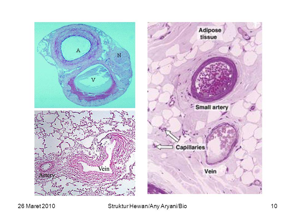 26 Maret 2010Struktur Hewan/Any Aryani/Bio10 ARTERI VENA
