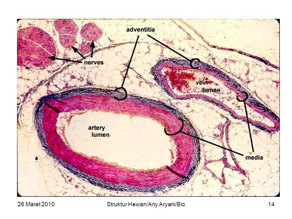26 Maret 2010Struktur Hewan/Any Aryani/Bio14