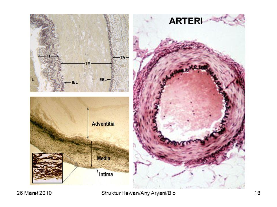 26 Maret 2010Struktur Hewan/Any Aryani/Bio18 ARTERI
