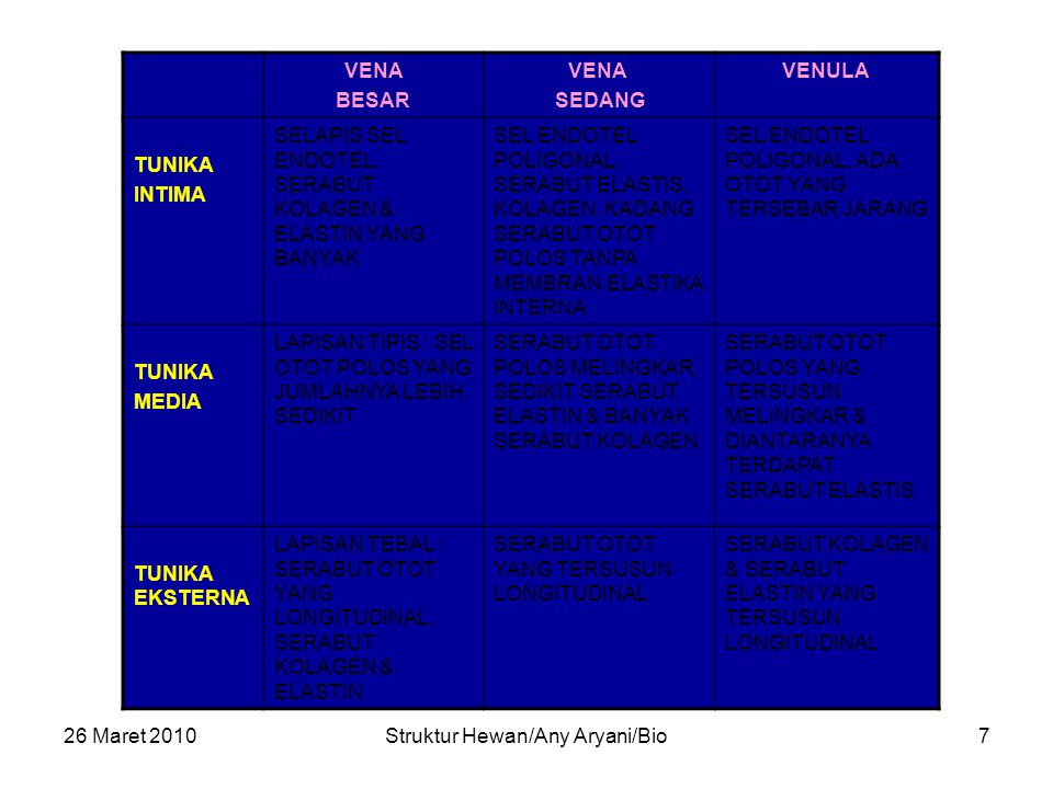 26 Maret 2010Struktur Hewan/Any Aryani/Bio7 VENA BESAR VENA SEDANG VENULA TUNIKA INTIMA SELAPIS SEL ENDOTEL, SERABUT KOLAGEN & ELASTIN YANG BANYAK SEL ENDOTEL POLIGONAL, SERABUT ELASTIS, KOLAGEN, KADANG SERABUT OTOT POLOS TANPA MEMBRAN ELASTIKA INTERNA SEL ENDOTEL POLIGONAL, ADA OTOT YANG TERSEBAR JARANG TUNIKA MEDIA LAPISAN TIPIS : SEL OTOT POLOS YANG JUMLAHNYA LEBIH SEDIKIT SERABUT OTOT POLOS MELINGKAR, SEDIKIT SERABUT ELASTIN & BANYAK SERABUT KOLAGEN SERABUT OTOT POLOS YANG TERSUSUN MELINGKAR & DIANTARANYA TERDAPAT SERABUT ELASTIS TUNIKA EKSTERNA LAPISAN TEBAL : SERABUT OTOT YANG LONGITUDINAL, SERABUT KOLAGEN & ELASTIN SERABUT OTOT YANG TERSUSUN LONGITUDINAL SERABUT KOLAGEN & SERABUT ELASTIN YANG TERSUSUN LONGITUDINAL