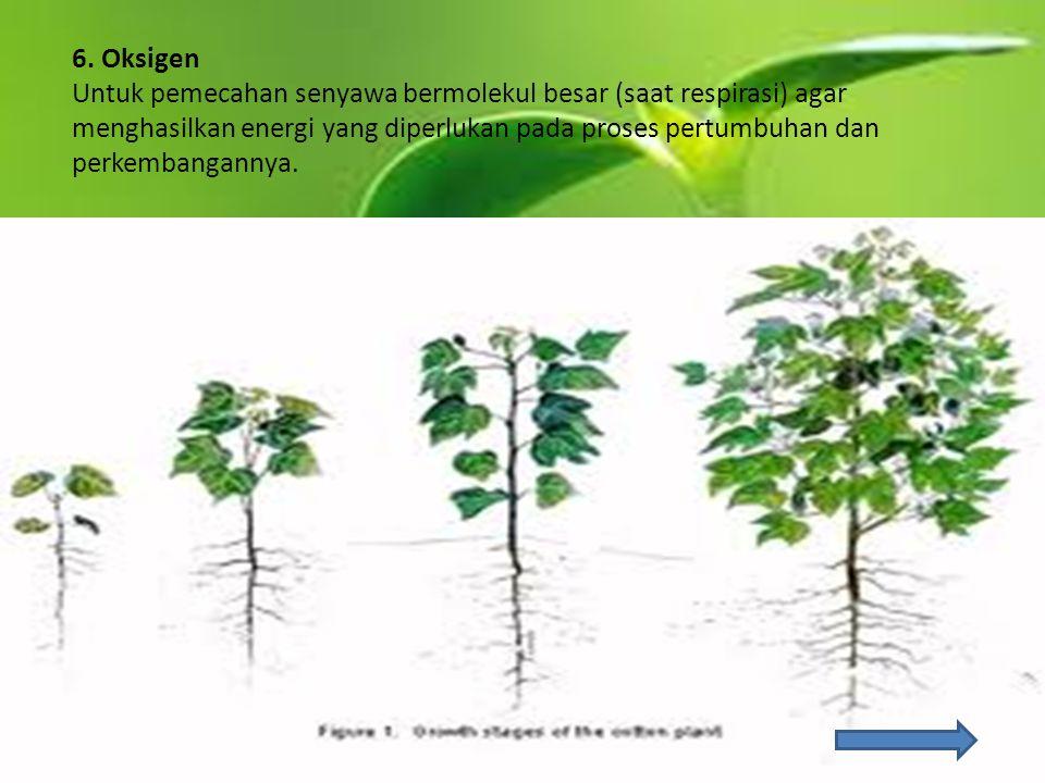 6. Oksigen Untuk pemecahan senyawa bermolekul besar (saat respirasi) agar menghasilkan energi yang diperlukan pada proses pertumbuhan dan perkembangan