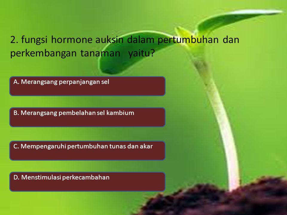 2. fungsi hormone auksin dalam pertumbuhan dan perkembangan tanaman yaitu? A. Merangsang perpanjangan sel B. Merangsang pembelahan sel kambium C. Memp