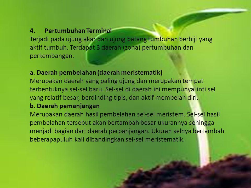 4. Pertumbuhan Terminal Terjadi pada ujung akar dan ujung batang tumbuhan berbiji yang aktif tumbuh. Terdapat 3 daerah (zona) pertumbuhan dan perkemba