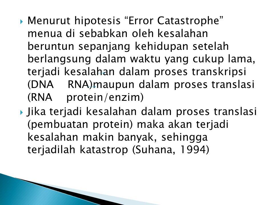 " Menurut hipotesis ""Error Catastrophe"" menua di sebabkan oleh kesalahan beruntun sepanjang kehidupan setelah berlangsung dalam waktu yang cukup lama,"