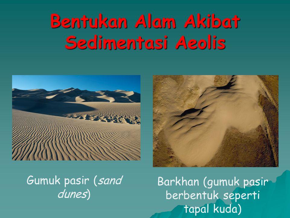 Bentukan Alam Akibat Sedimentasi Aeolis Gumuk pasir (sand dunes) Barkhan (gumuk pasir berbentuk seperti tapal kuda)