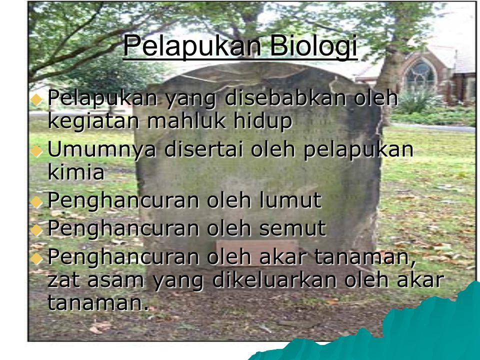 Pelapukan Biologi  Pelapukan  Pelapukan yang disebabkan oleh kegiatan mahluk hidup  Umumnya  Umumnya disertai oleh pelapukan kimia  Penghancuran