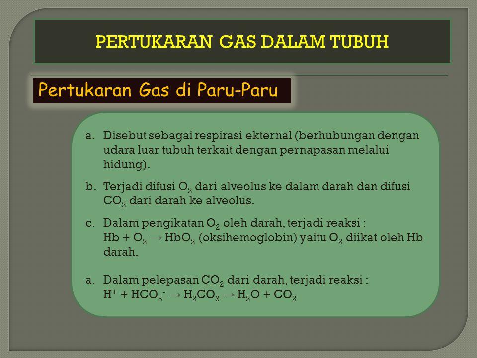 PERTUKARAN GAS DALAM TUBUH Pertukaran Gas di Paru-Paru a.Disebut sebagai respirasi ekternal (berhubungan dengan udara luar tubuh terkait dengan pernapasan melalui hidung).