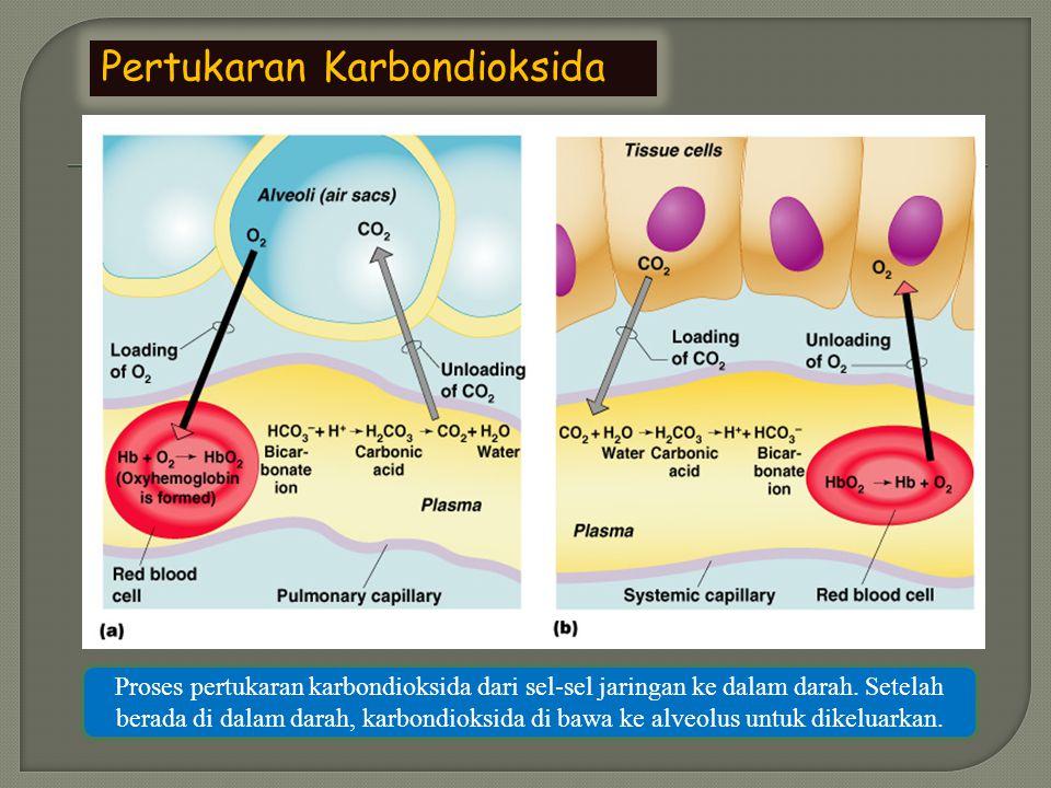 Pertukaran CO 2 Ada 3 cara pengangkutan CO 2 1.CO 2 larut dalam plasma, membentuk asam karbonat.