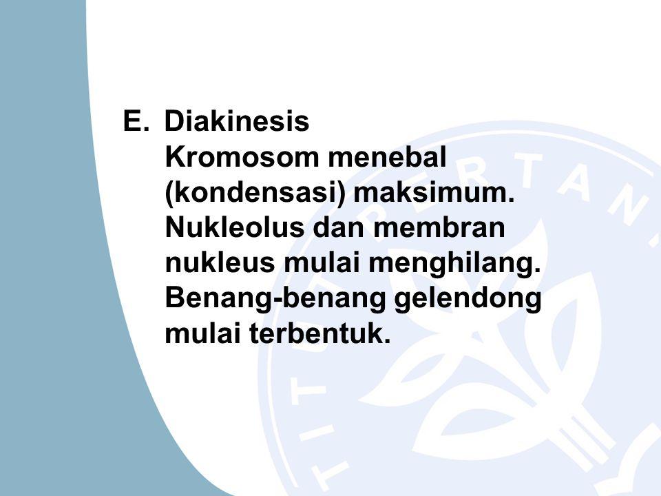 E.Diakinesis Kromosom menebal (kondensasi) maksimum.