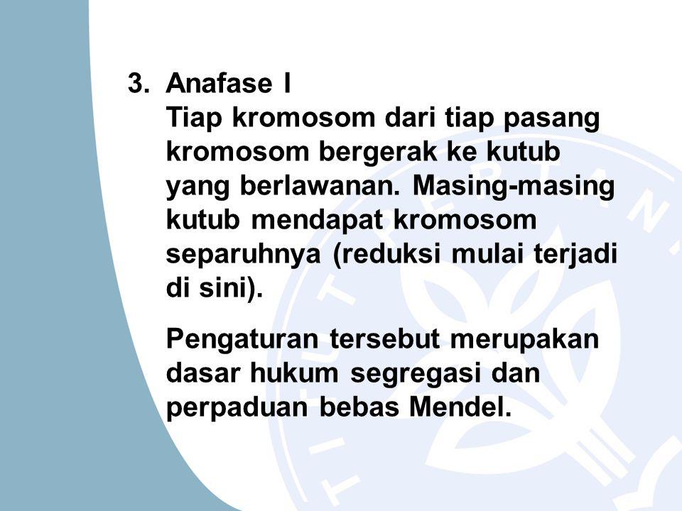 3. Anafase I Tiap kromosom dari tiap pasang kromosom bergerak ke kutub yang berlawanan. Masing-masing kutub mendapat kromosom separuhnya (reduksi mula