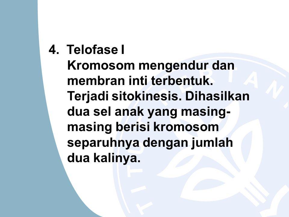 4. Telofase I Kromosom mengendur dan membran inti terbentuk. Terjadi sitokinesis. Dihasilkan dua sel anak yang masing- masing berisi kromosom separuhn