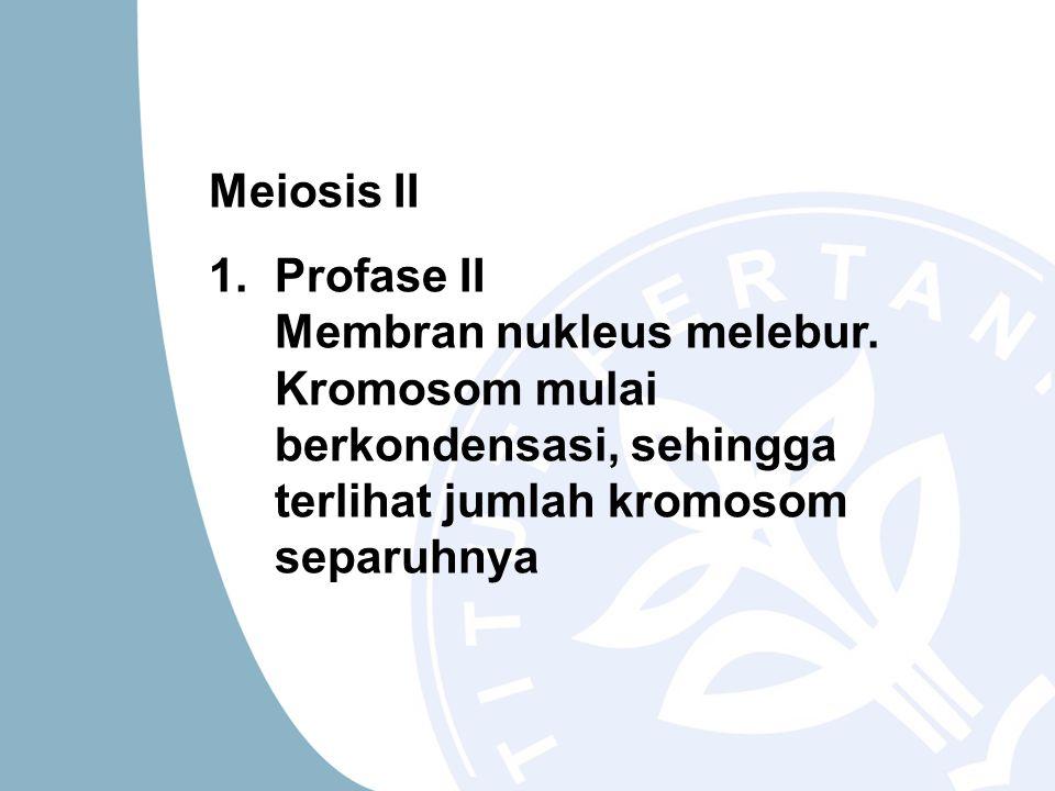 Meiosis II 1.Profase II Membran nukleus melebur. Kromosom mulai berkondensasi, sehingga terlihat jumlah kromosom separuhnya