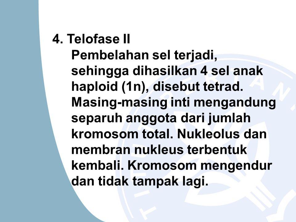 4. Telofase II Pembelahan sel terjadi, sehingga dihasilkan 4 sel anak haploid (1n), disebut tetrad. Masing-masing inti mengandung separuh anggota dari