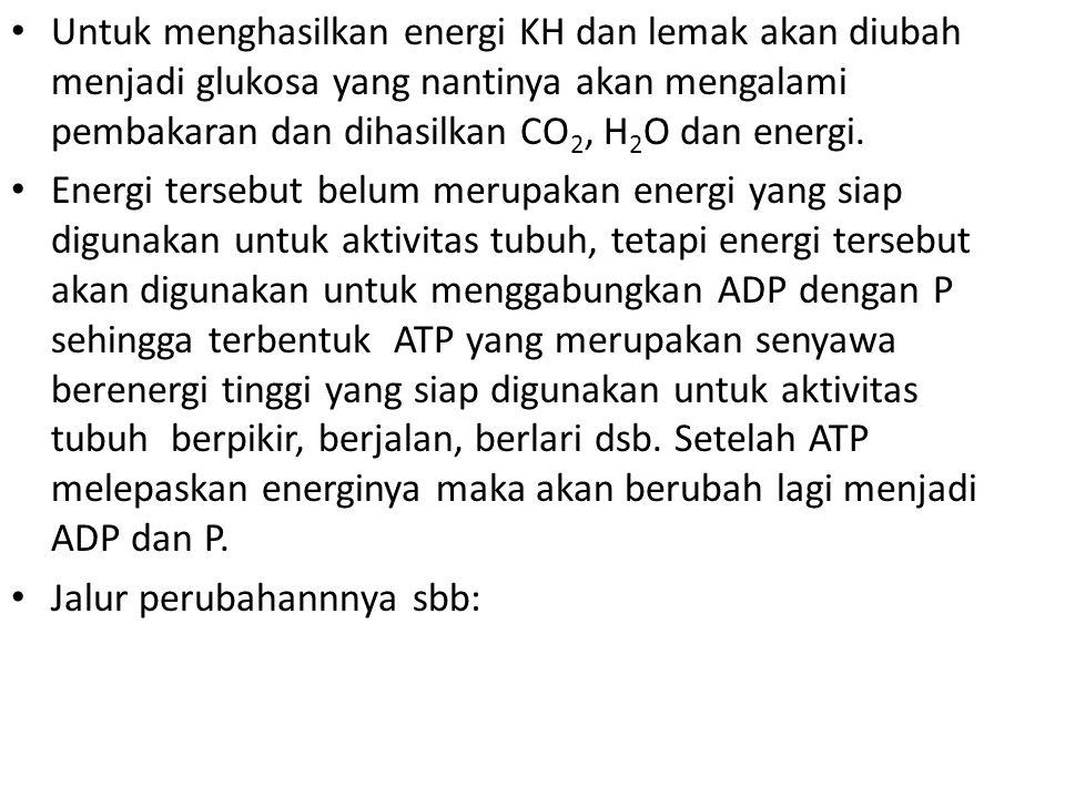 Untuk menghasilkan energi KH dan lemak akan diubah menjadi glukosa yang nantinya akan mengalami pembakaran dan dihasilkan CO 2, H 2 O dan energi. Ener