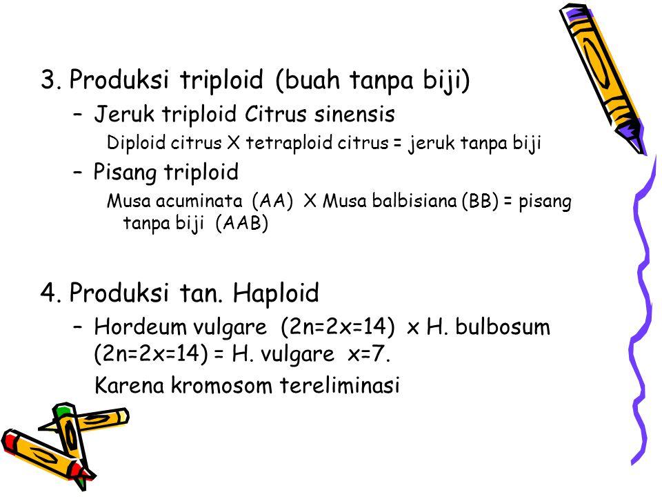 3. Produksi triploid (buah tanpa biji) –Jeruk triploid Citrus sinensis Diploid citrus X tetraploid citrus = jeruk tanpa biji –Pisang triploid Musa acu