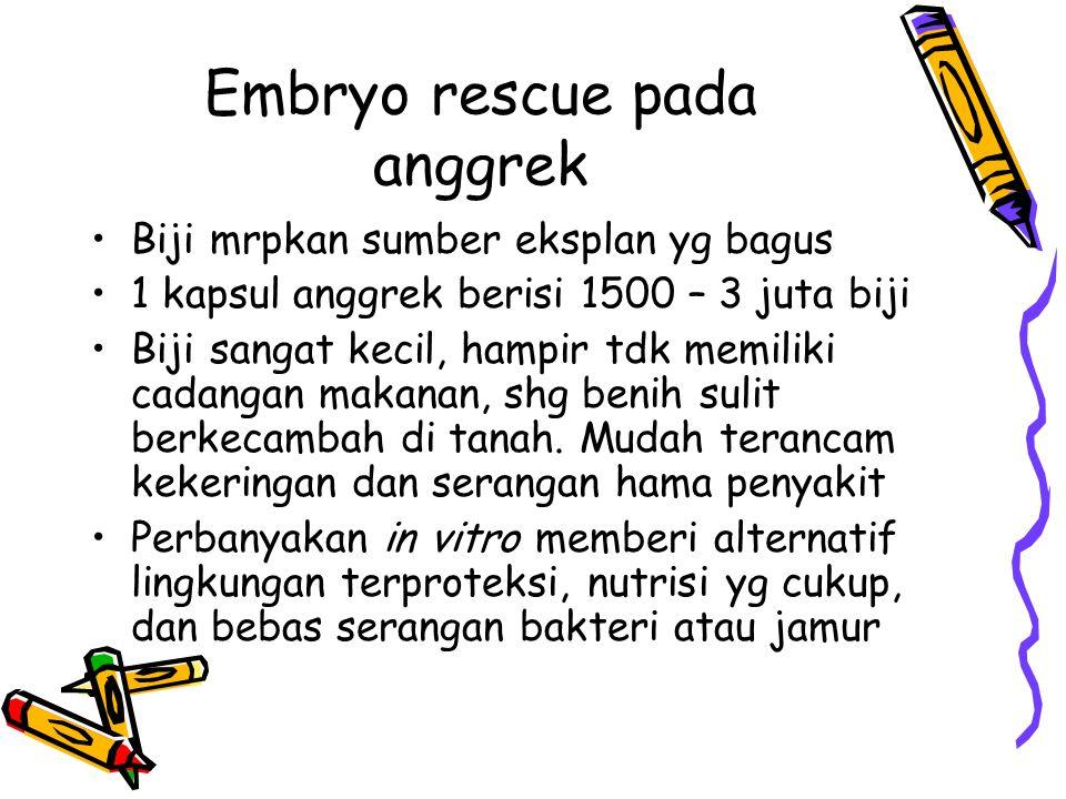 Embryo rescue pada anggrek Biji mrpkan sumber eksplan yg bagus 1 kapsul anggrek berisi 1500 – 3 juta biji Biji sangat kecil, hampir tdk memiliki cadan