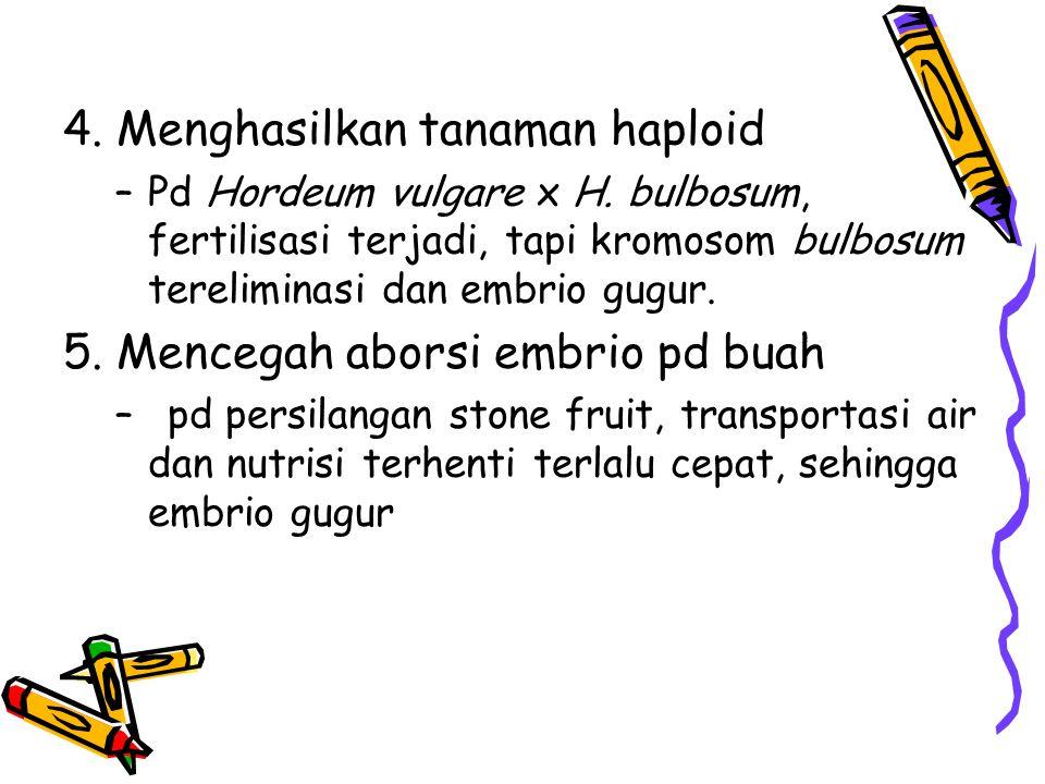4. Menghasilkan tanaman haploid –Pd Hordeum vulgare x H. bulbosum, fertilisasi terjadi, tapi kromosom bulbosum tereliminasi dan embrio gugur. 5. Mence