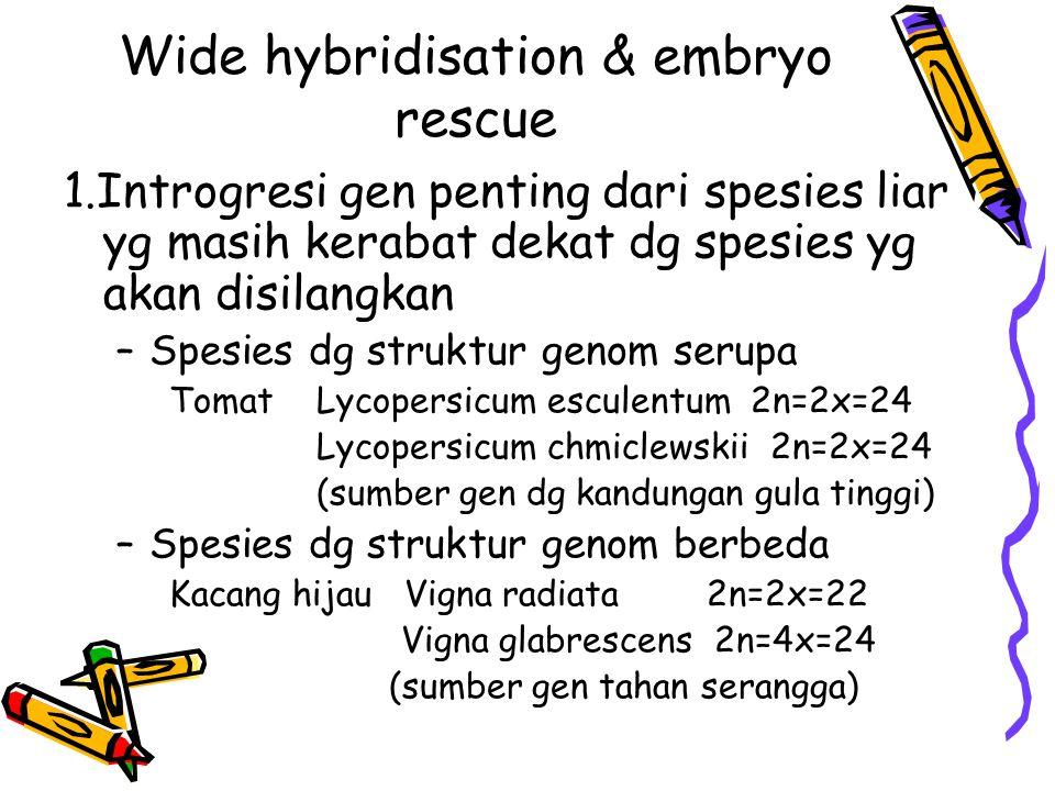 Wide hybridisation & embryo rescue 1.Introgresi gen penting dari spesies liar yg masih kerabat dekat dg spesies yg akan disilangkan –Spesies dg strukt