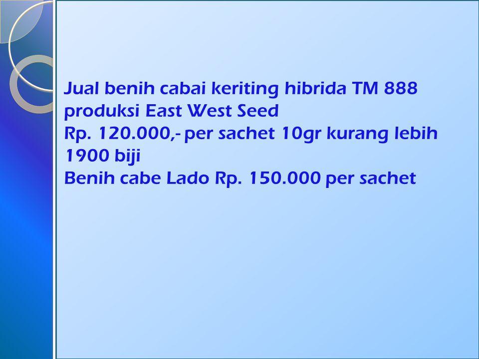 Jual benih cabai keriting hibrida TM 888 produksi East West Seed Rp.