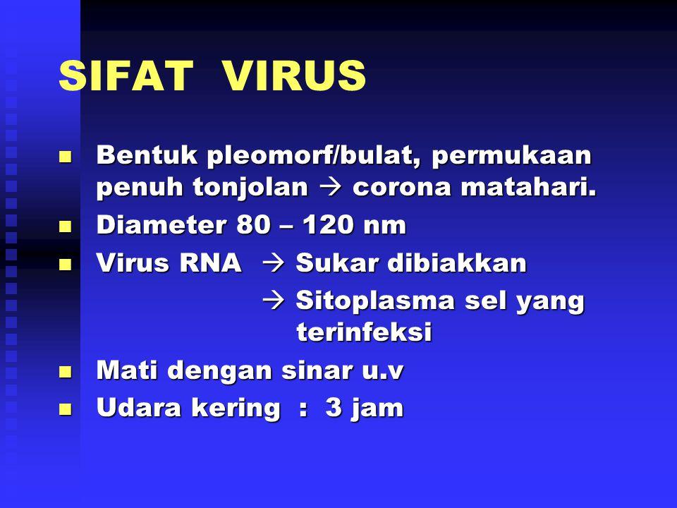 PENYEBAB SARS Lama : Penyebab Infeksi T.R ( Ringan dan Tdk Berbahaya ) ( Ringan dan Tdk Berbahaya ) Baru :MUTASI GANAS