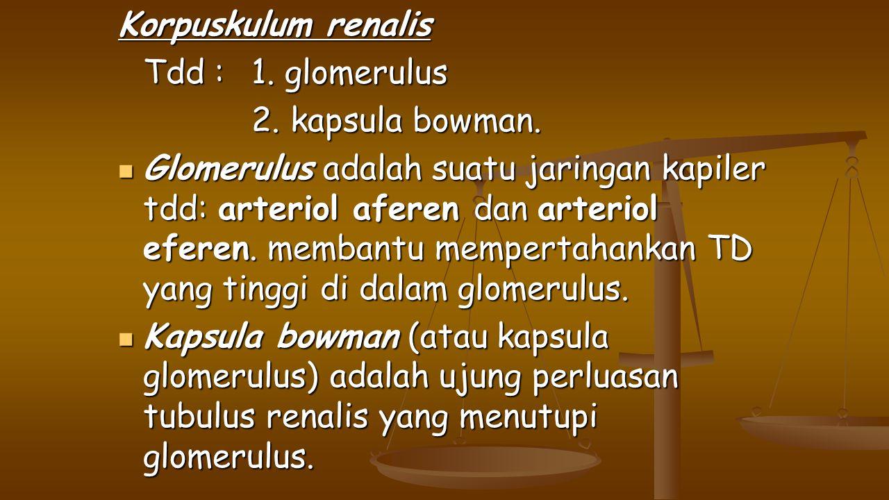 Korpuskulum renalis Tdd : 1. glomerulus 2. kapsula bowman. Glomerulus adalah suatu jaringan kapiler tdd: arteriol aferen dan arteriol eferen. membantu