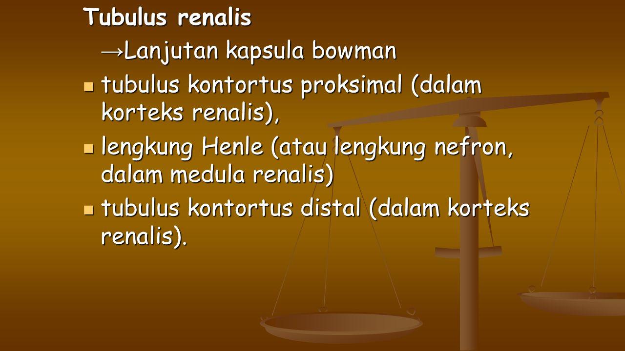 Tubulus renalis → Lanjutan kapsula bowman tubulus kontortus proksimal (dalam korteks renalis), tubulus kontortus proksimal (dalam korteks renalis), le