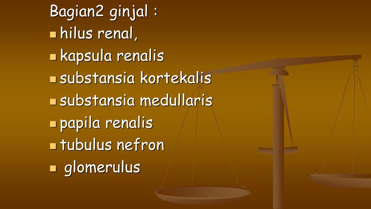 Bagian2 ginjal : hilus renal, hilus renal, kapsula renalis kapsula renalis substansia kortekalis substansia kortekalis substansia medullaris substansi