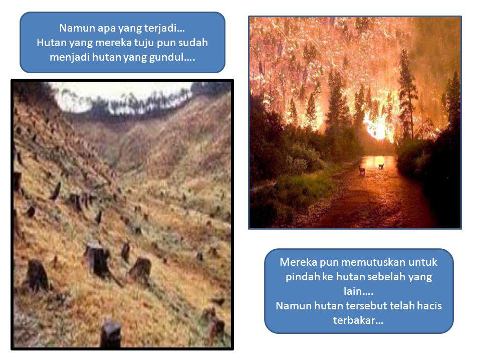 Namun apa yang terjadi… Hutan yang mereka tuju pun sudah menjadi hutan yang gundul…. Mereka pun memutuskan untuk pindah ke hutan sebelah yang lain…. N