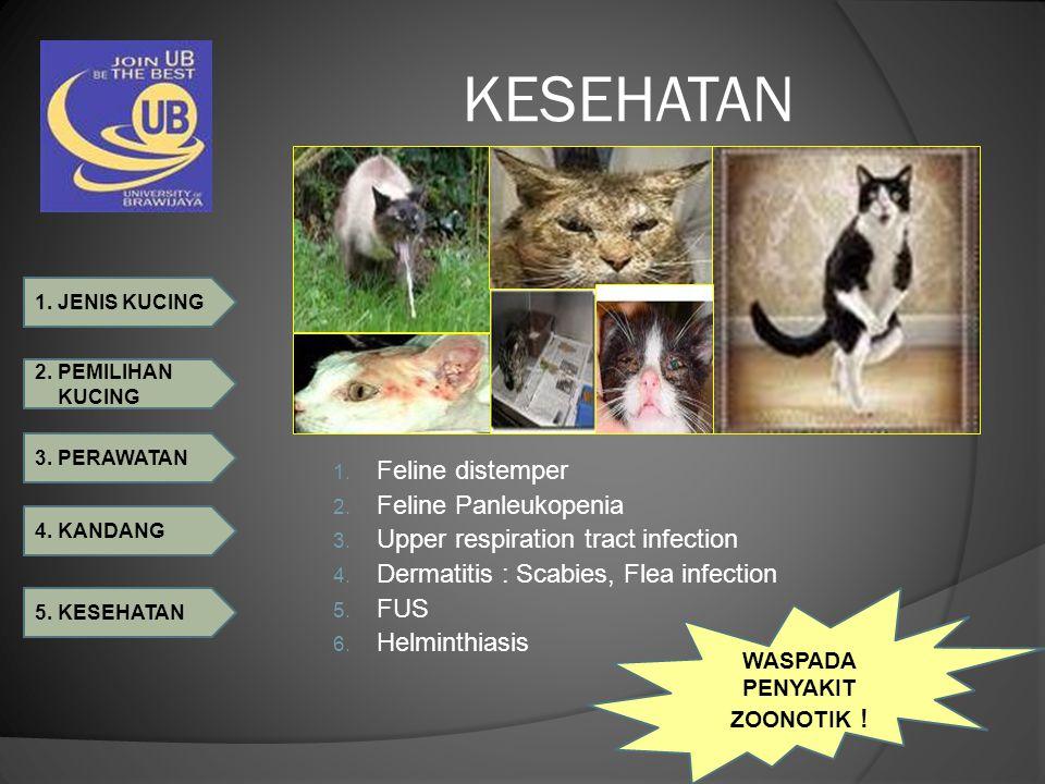 1. JENIS KUCING 2. PEMILIHAN KUCING 3. PERAWATAN 4. KANDANG 5. KESEHATAN KESEHATAN 1. Feline distemper 2. Feline Panleukopenia 3. Upper respiration tr