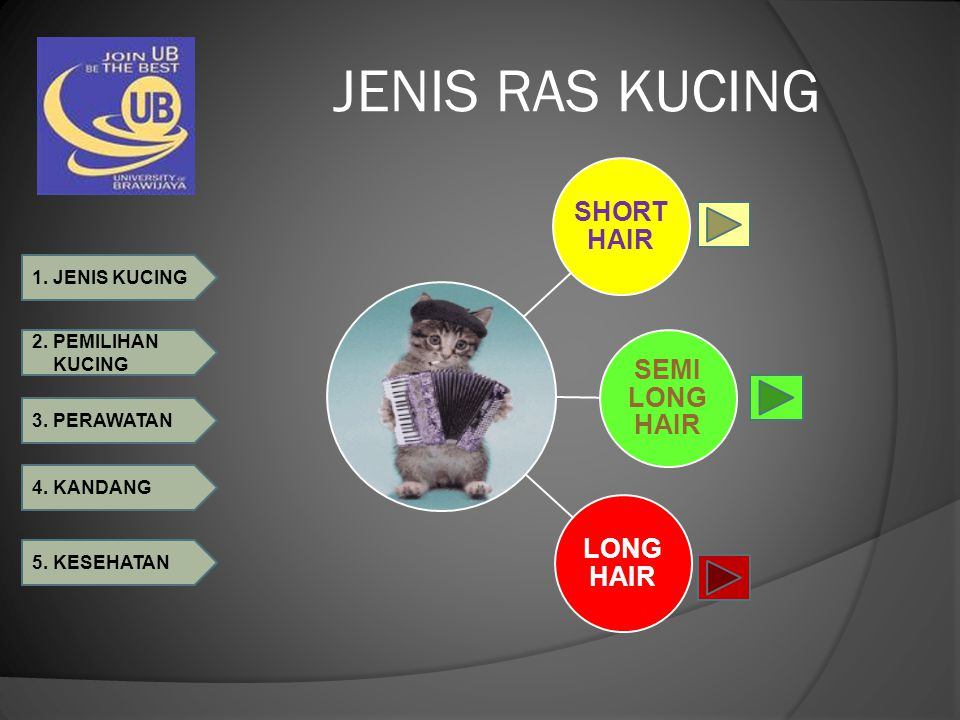 1. JENIS KUCING 2. PEMILIHAN KUCING 3. PERAWATAN 4. KANDANG 5. KESEHATAN JENIS RAS KUCING SHORT HAIR SEMI LONG HAIR LONG HAIR