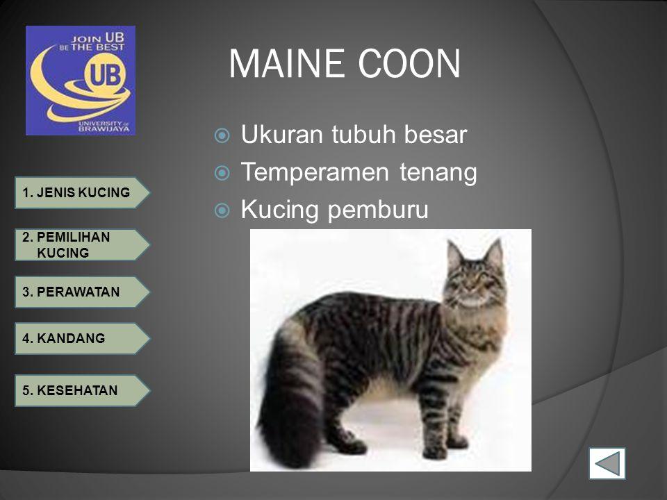 1. JENIS KUCING 2. PEMILIHAN KUCING 3. PERAWATAN 4. KANDANG 5. KESEHATAN MAINE COON  Ukuran tubuh besar  Temperamen tenang  Kucing pemburu