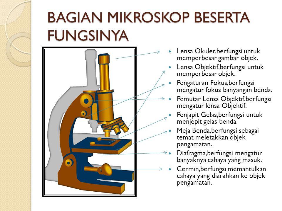 BAGIAN MIKROSKOP BESERTA FUNGSINYA Lensa Okuler,berfungsi untuk memperbesar gambar objek.