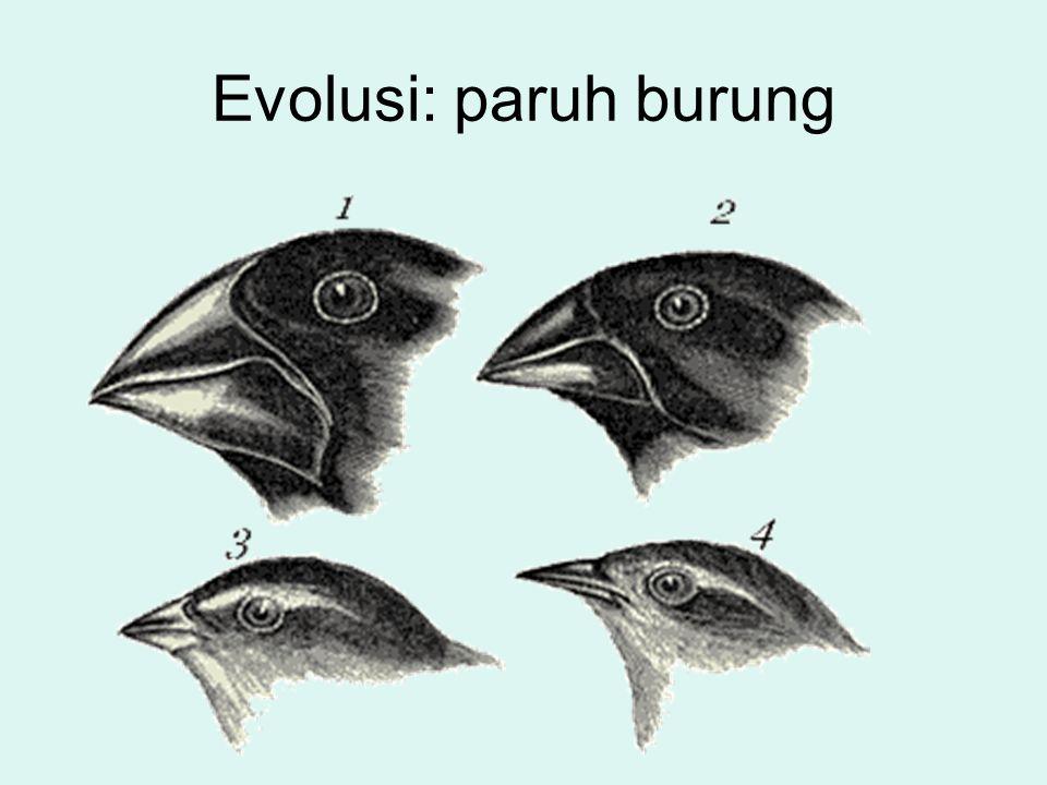 Evolusi: paruh burung
