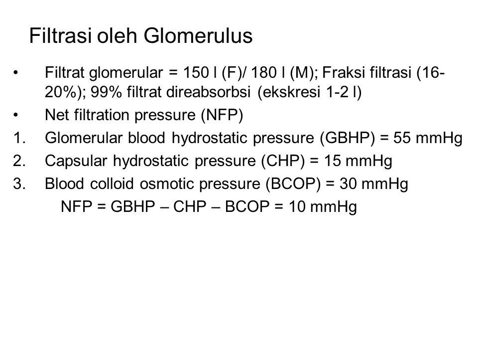 Filtrasi oleh Glomerulus Filtrat glomerular = 150 l (F)/ 180 l (M); Fraksi filtrasi (16- 20%); 99% filtrat direabsorbsi (ekskresi 1-2 l) Net filtratio