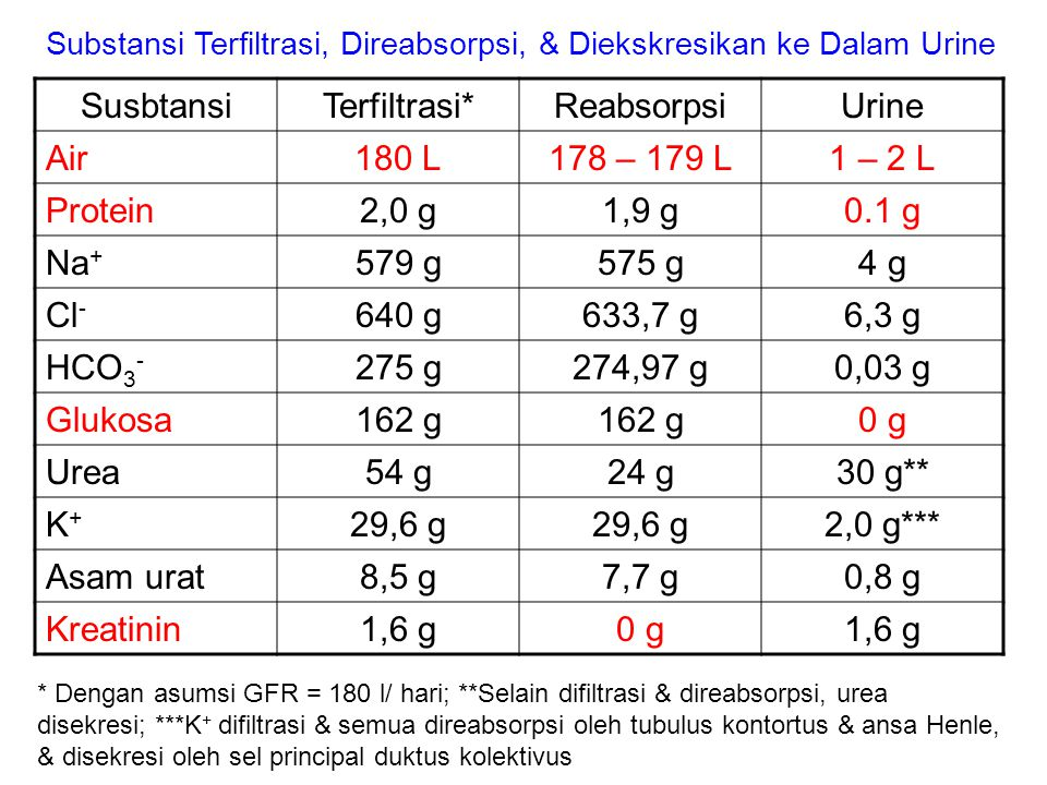SusbtansiTerfiltrasi*ReabsorpsiUrine Air180 L178 – 179 L1 – 2 L Protein2,0 g1,9 g0.1 g Na + 579 g575 g4 g Cl - 640 g633,7 g6,3 g HCO 3 - 275 g274,97 g