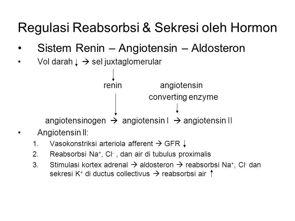 Regulasi Reabsorbsi & Sekresi oleh Hormon Sistem Renin – Angiotensin – Aldosteron Vol darah  sel juxtaglomerular renin angiotensin converting enzyme