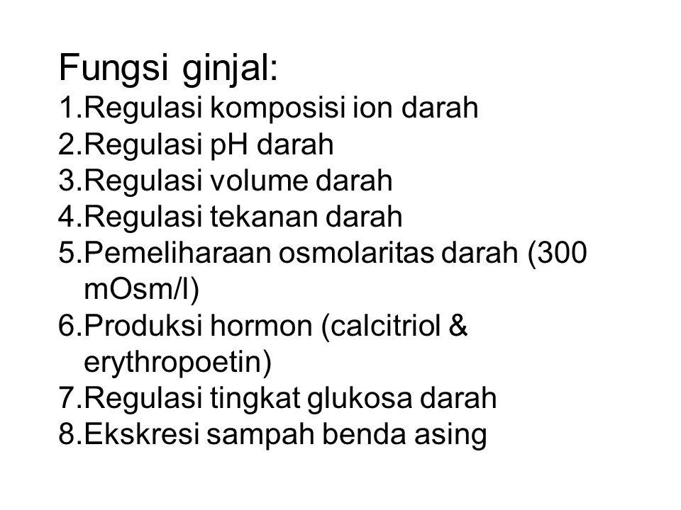 Fungsi ginjal: 1.Regulasi komposisi ion darah 2.Regulasi pH darah 3.Regulasi volume darah 4.Regulasi tekanan darah 5.Pemeliharaan osmolaritas darah (3