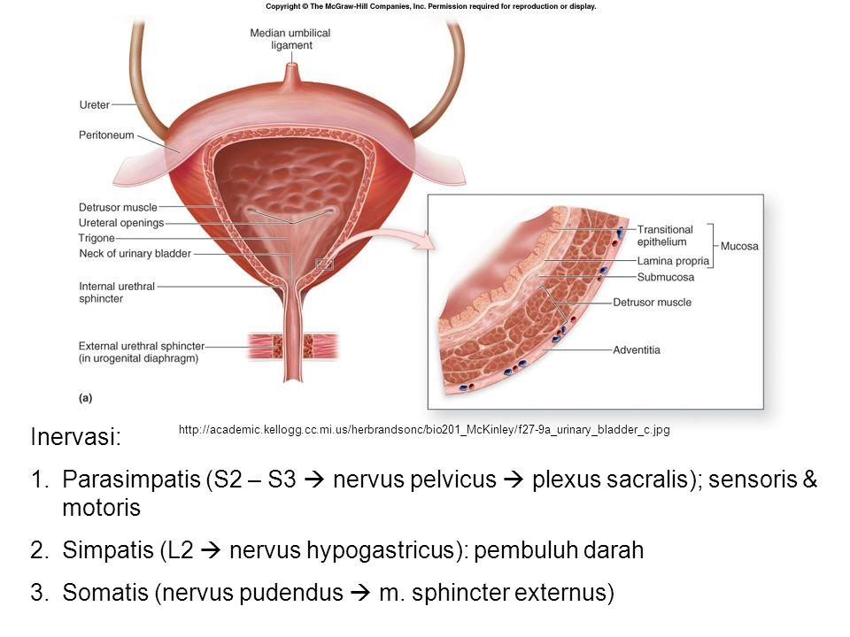 http://academic.kellogg.cc.mi.us/herbrandsonc/bio201_McKinley/f27-9a_urinary_bladder_c.jpg Inervasi: 1.Parasimpatis (S2 – S3  nervus pelvicus  plexu