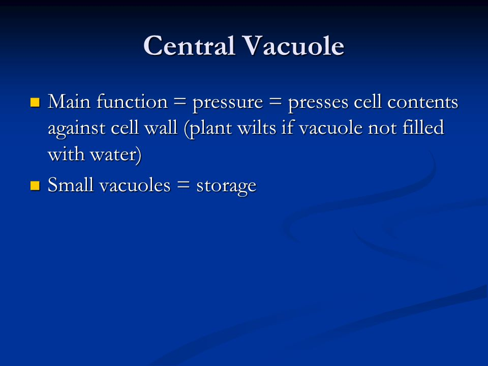 Central Vacuole Main function = pressure = presses cell contents against cell wall (plant wilts if vacuole not filled with water) Main function = pressure = presses cell contents against cell wall (plant wilts if vacuole not filled with water) Small vacuoles = storage Small vacuoles = storage