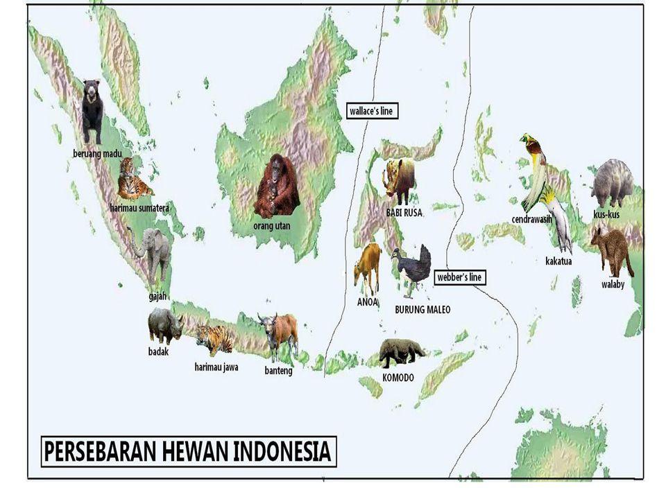 Persebaran Flora Dan Fauna Di Indonesia Ppt Download