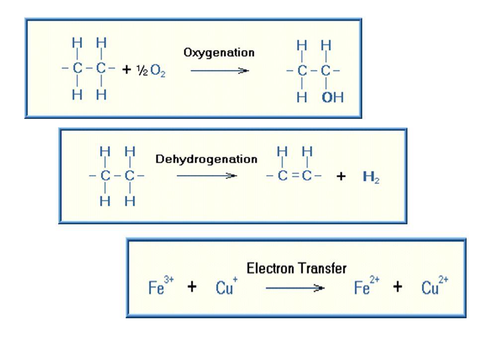 Biotransformasi Erwin Dyah N Ppt Download