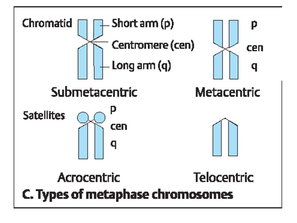 Teori dan struktur sel sub bab inti pembelahan sel bagian ii 40 ccuart Choice Image