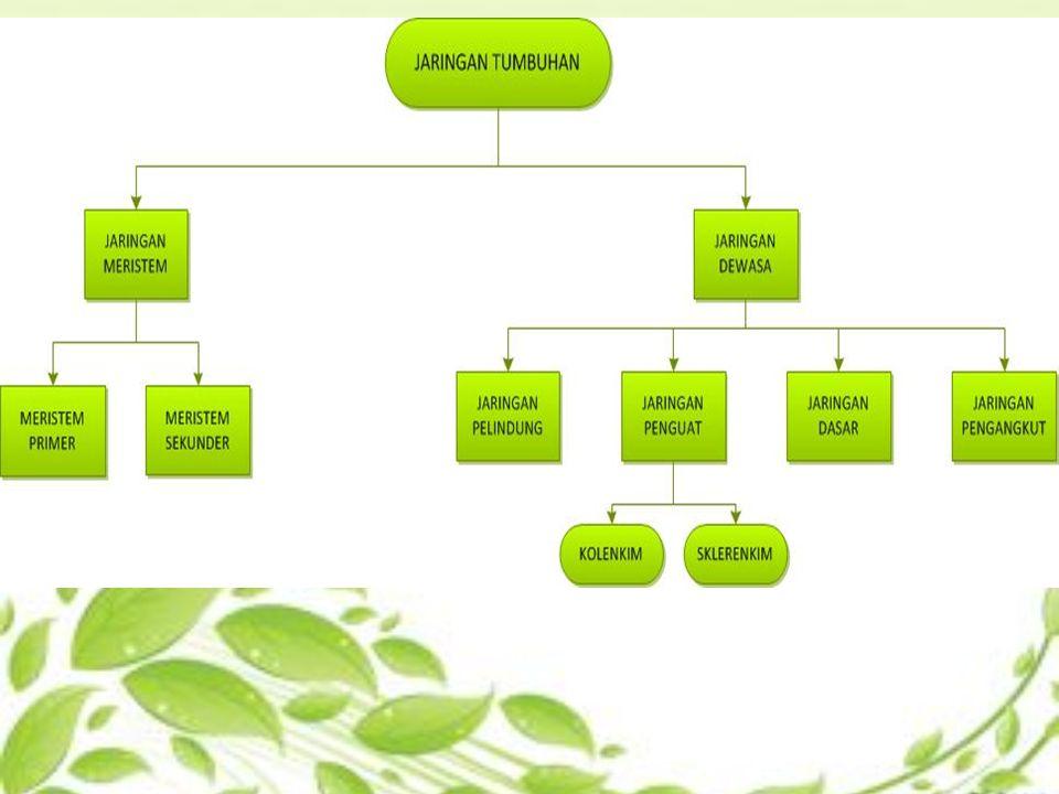 Struktur dan fungsi jaringan tumbuhan jaringan meristem ppt download 3 jaringan meristem ccuart Choice Image