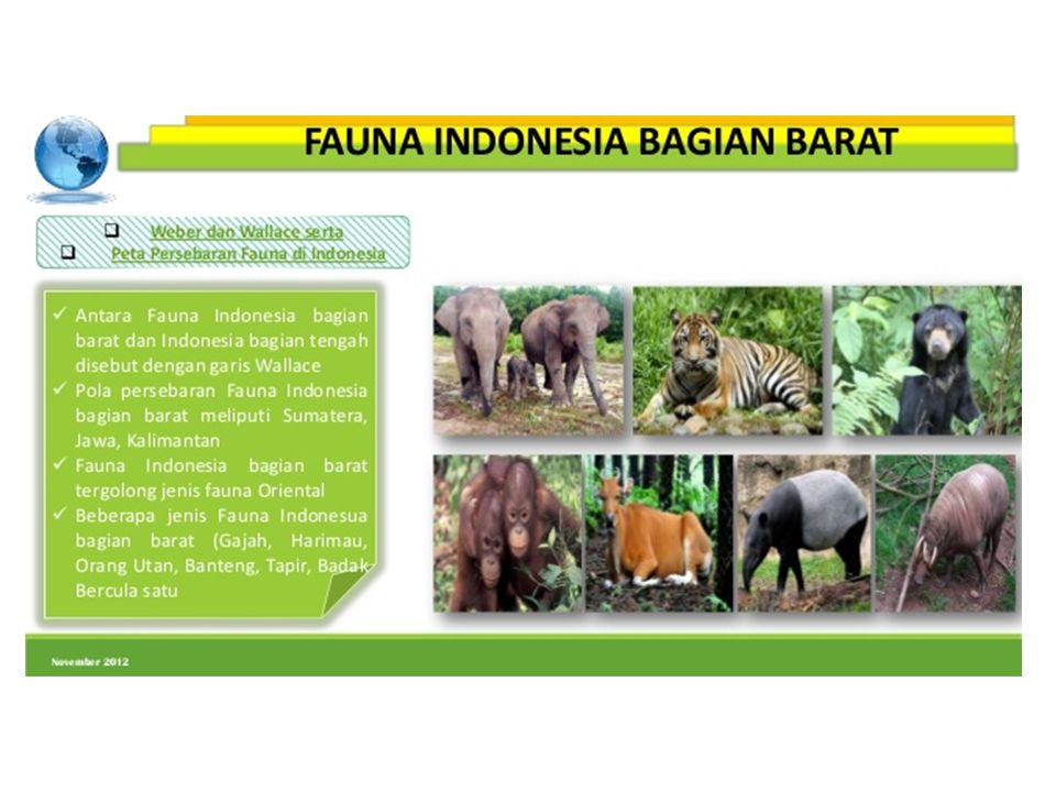 7300 Gambar Hewan Fauna Indonesia Bagian Barat HD Terbaru