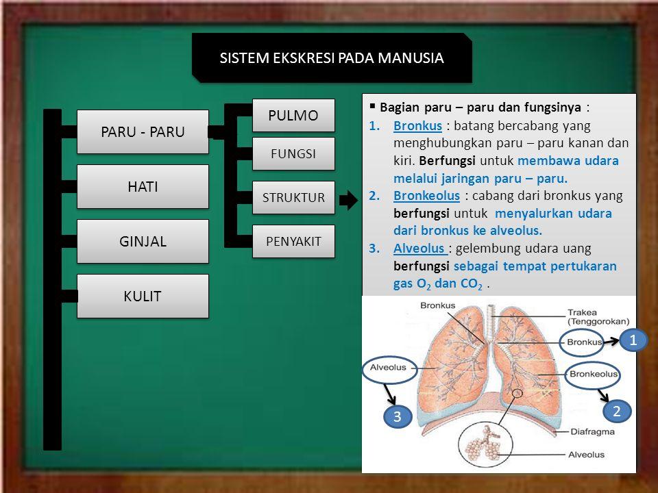 Sistem Ekskresi Manusia Hewan Sistem Ekskresi Pada Manusia Kulit Ginjal Hati Paru Paru Fungsi Struktur Penyakit Pulmo Paru Paru Merupakan Sistem Respirasi Ppt Download