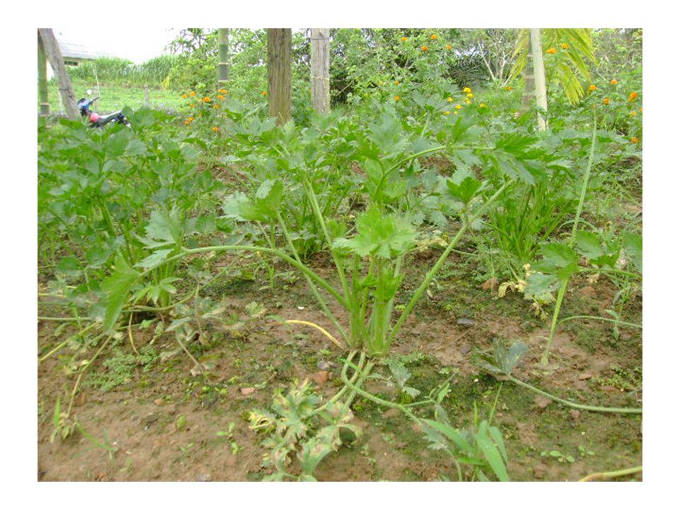 Pestisida Nabati Oleh Jakes Sito Sp Ppt Download